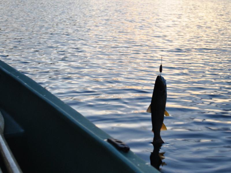 fiske001
